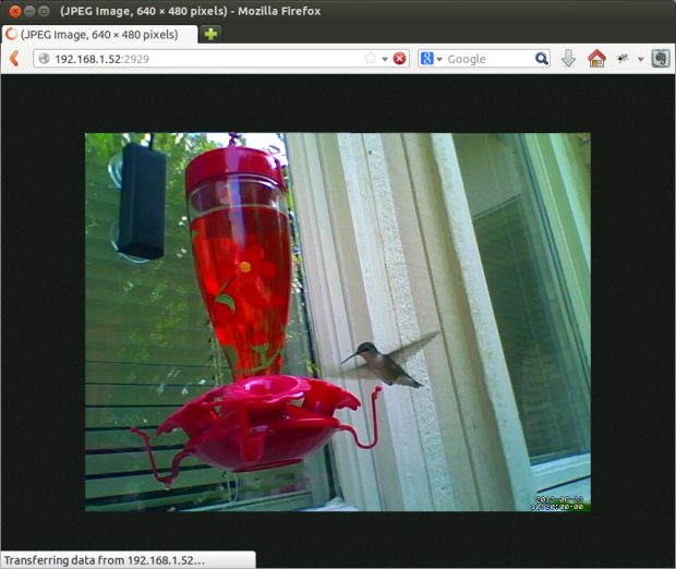 Hummingbird Feeder Remote Camera