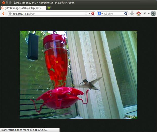 Hummingbird Feeder Remote Camera